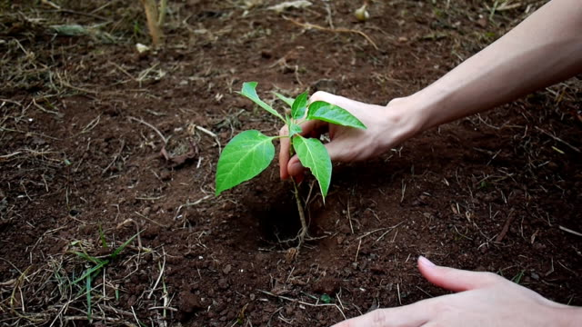 Planting trees for Nature Conservation video