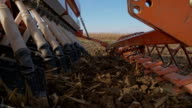 SLO MO Planting Wheat Seeds video