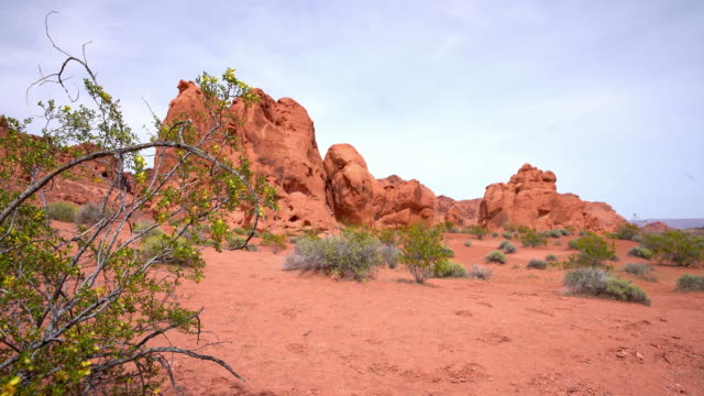DS Plants growing in Canyonlands National Park video
