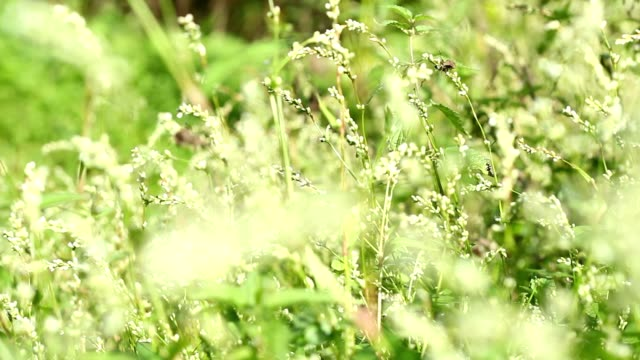 Plants in the wind and an insect video