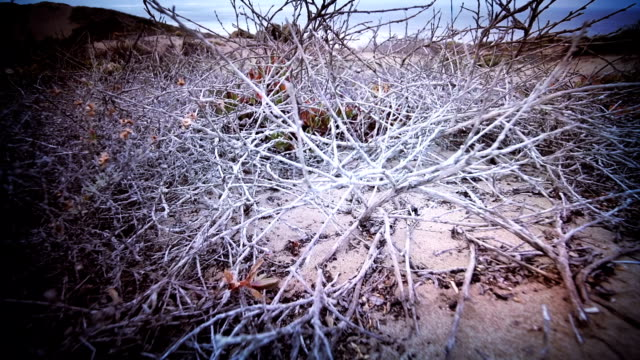 Plants of the sand dune video