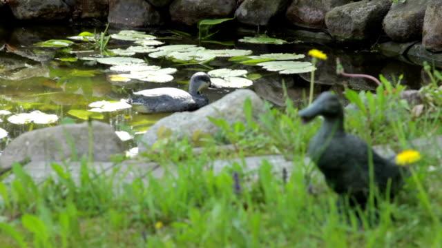 plaster casts of wild ducks video