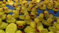 Plastic Ducks Floating around in Water video