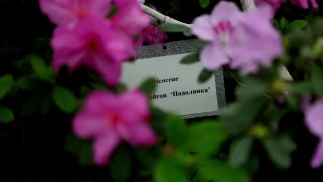 Plastic Tag Among a Few Large Flowers on Green Bush of Azaleas video