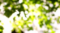 Play of sunbeams though tree foliage on the wind. video