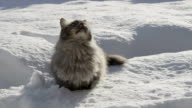SLOW MOTION: Playful cat jumping in the snow video