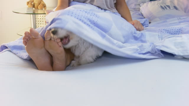 HD: Playful Dog In Bed video