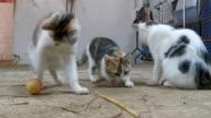 playful kittens video