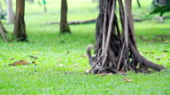 Playful Squirrel. video