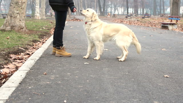Playing with dog in park video