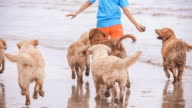 Playing With Golden Retriever On The Beach video