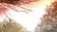 Plum Tree Garden video