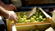 Plums and Apricots in wooden crates for sale on market stall. video