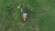 Point of view of walking a dog in a park video