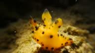 Pokemon Nudibranch undersea video