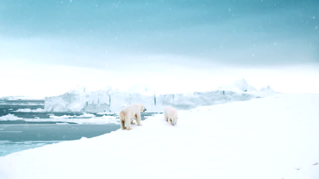 Polar Bear Day video