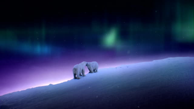 Polar Bear Night video