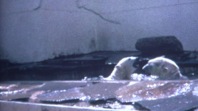 Polar Bears Fighting 1970 video