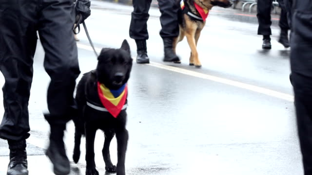 Policemen with Dogs video