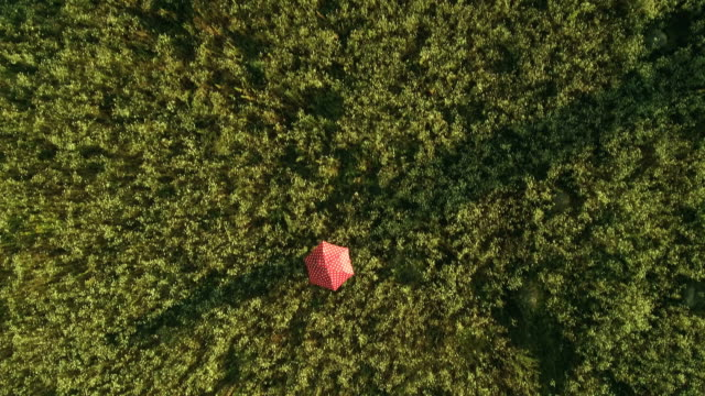Polka dot red umbrella moving on the field video