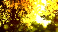 Pollen and tree leaves on the wind in sunset video