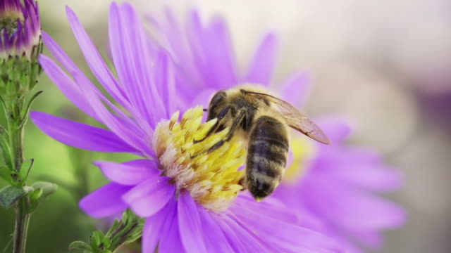SLOW MOTION: Pollination video