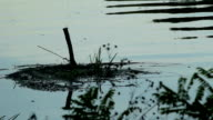 Polluted water video