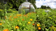Polyethylene greenhouse in vegetable garden with calendula, time lapse video