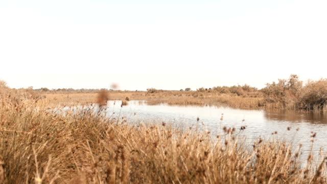 Pond in autumn video