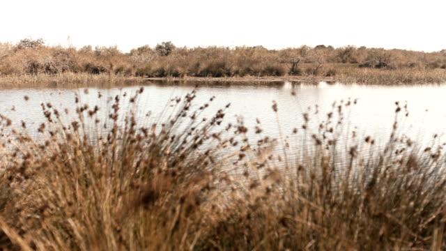 PAN : Pond in autumn video