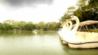 Pond in Lumphini Park, Cloudy day video