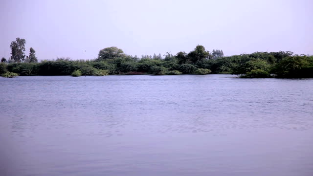 Pond near village video