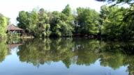 Pond turtles zoom in video