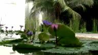 Pond video