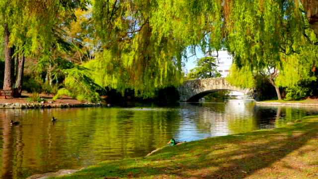 4K Pond with Ducks and Arch Rock Bridge with Willow Trees, Beacon Hill Park video
