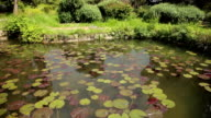 Pond With Water Lilies video