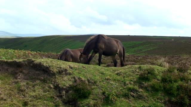Ponies video