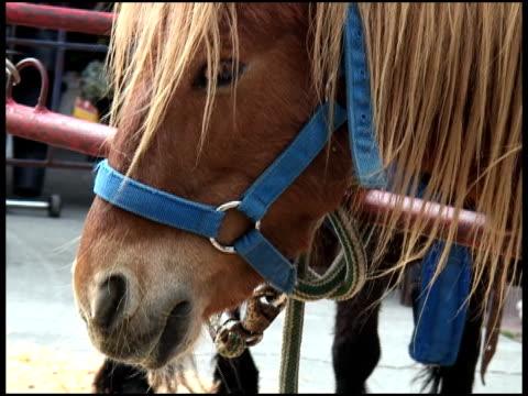 Pony Looks At Camera video