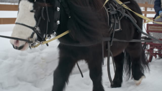 Pony Pulling Wagon with Little Girls video