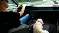 Poodle at the road on the passenger seat with her owner video