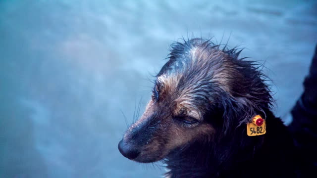Poor Street Homeless Dog Completely Wet During Stormy Weather video
