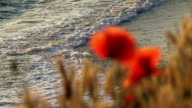 Poppies near the sea video