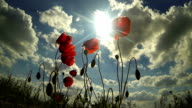 Poppies, sun and clouds video