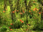 PAL: Poppies video