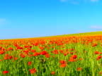 Poppy Field video