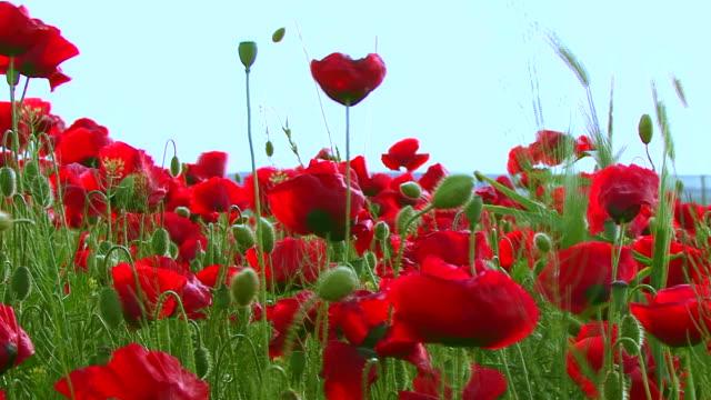 Poppys video