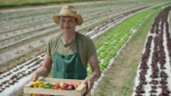 Portrait of male farmer holding a full vegetable crate video