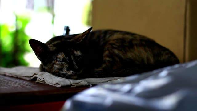 Portrait of a sleeping cat in sunday afternoon video