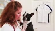 Portrait of a vet & Boston Terrier video
