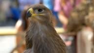 Portrait of a Vulture in Public Place video